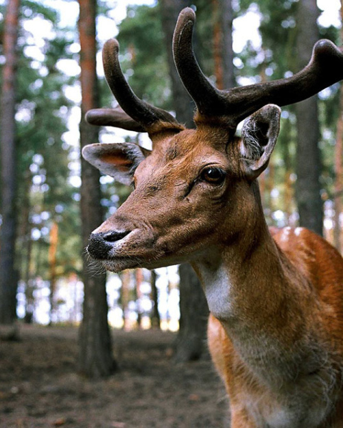 Autumn driving beware deer